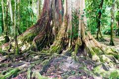 Bujny Karaiby tropikalny las deszczowy fotografia royalty free