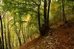 Bujny koloru żółtego i zieleni liście w głębokich drewnach obrazy stock