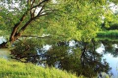 bujny krajobrazu Fotografia Royalty Free