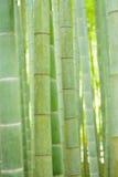 Bujny lasów zielony Japoński Bambusowy tło obraz stock
