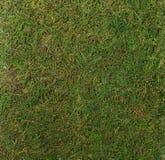Bujny mech tekstury zielony zbliżenie zdjęcie royalty free