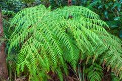 Bujny paproci zieleni liście obrazy stock