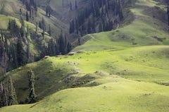 Bujny paya zielone łąki w Kaghan obrazy royalty free