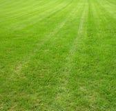 bujny trawnik Zdjęcia Royalty Free