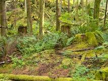 Bujny tropikalny las deszczowy zielony drugorzędny gaj w Kanada BC Zdjęcie Stock