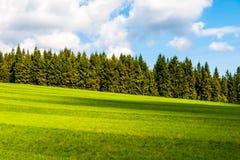 Bujny zieleń i świeżo skoszona łąka na pogodnym letnim dniu Wiejski landspace z zielonym iglastym lasem, niebieskie niebo i Zdjęcie Royalty Free