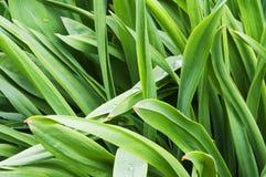 Bujny zieleń Obrazy Stock