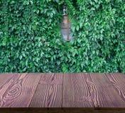 Bujny zieleni ściana hedera helix lub pełzacza bluszcza ulistnienia dywanowy wzór zdjęcie royalty free