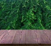 Bujny zieleni ściana hedera helix lub pełzacza bluszcza ulistnienia dywanowy wzór obraz royalty free