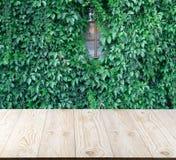 Bujny zieleni ściana hedera helix lub pełzacza bluszcza ulistnienia dywanowy wzór zdjęcia stock