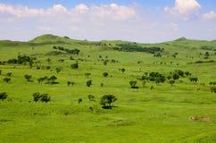Bujny zieleni górkowaci pola z rzadkimi drzewami zdjęcie royalty free