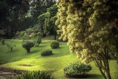 Bujny zieleni ogródu sceneria z krajobrazowym projekta parkiem Królewski Ogrodowy Peradeniya w Sri Lanka Kandy niedalekich otacza zdjęcia stock