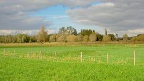 Bujny zieleni pola z drzewami na chmurnym dniu w Flamandzkiej wsi zdjęcia stock