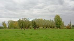 Bujny zieleni pola z drzewami na chmurnym dniu w Flamandzkiej wsi obrazy stock