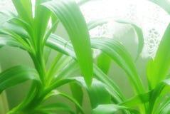 Bujny zieleni ulistnienie i liście Zdjęcia Stock