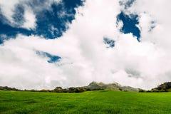 Bujny zielona łąka pod pięknym niebem Zielona łąka pod niebieskimi niebami Piękno natury tło Bydło wypasa Piękny zdjęcie stock