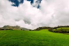 Bujny zielona łąka pod pięknym niebem Zielona łąka pod niebieskimi niebami Piękno natury tło Bydło wypasa Piękny fotografia stock