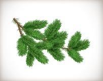 Bujny zielona świerczyna lub jedliny gałąź odizolowywająca na białym tle Przedmiot lub element dla projekta bożych narodzeń i now obraz royalty free