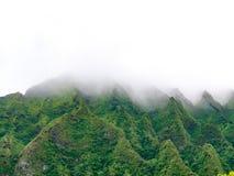 Bujny zielona góra nakrywa nicestwienie w mgłę fotografia royalty free