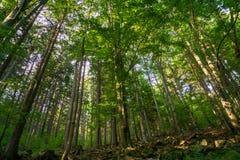 Bujny zielona roślinność w Sudety górach Miedzygorze Pole zdjęcie stock