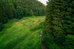 Bujny zielona roślinność w Sudety górach Miedzygorze Pole obraz royalty free