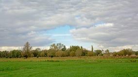 Bujny zielone łąki z drzewami na chmurnym dniu w Flamandzkiej wsi zdjęcia stock