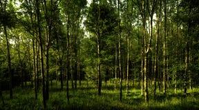 Bujny zielony las na wiosna dniu zdjęcia royalty free