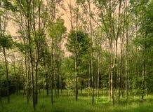 Bujny zielony las na wiosna dniu obraz stock