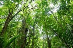 Bujny zielony las w Nowa Zelandia obrazy royalty free