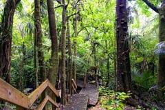 Bujny zielony las w Nowa Zelandia obrazy stock