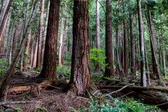 Bujny zielony lasowy ślad przerastający z paprociami i rośliny życiem obraz royalty free