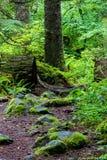 Bujny zielony lasowy ślad przerastający z paprociami i rośliny życiem zdjęcia royalty free