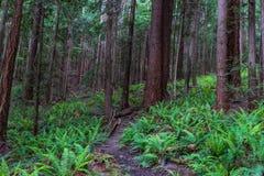 Bujny zielony lasowy ślad przerastający z rośliną zdjęcia royalty free