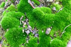 Bujny zielony mech zakrywał kamień Powierzchnia zakrywa z naród mech obrazy royalty free