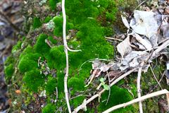 Bujny zielony mech zakrywał kamień Powierzchnia zakrywa z naród mech fotografia royalty free