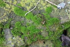 Bujny zielony mech zakrywał kamień Powierzchnia zakrywa z naród mech obraz royalty free