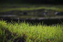 Bujny zielony obszar trawiasty w India zdjęcie stock