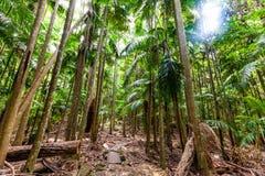 Bujny zielony temperate tropikalny las deszczowy w Australia fotografia royalty free