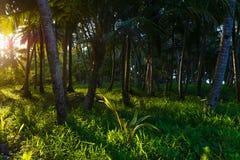 Bujny zielony tropikalny las, sunburst w drzewko palmowe lesie na pustynnej wyspie, Sumatra, Indonezja Inspiracyjna natura, roman zdjęcia royalty free
