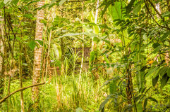 Bujny zielony ulistnienie chuje kabinę Obrazy Royalty Free