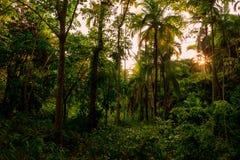 Bujny zielony ulistnienie w tropikalnej dżungli Tajlandia zdjęcia royalty free