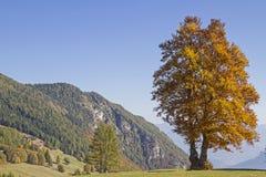Buk w górach obraz royalty free