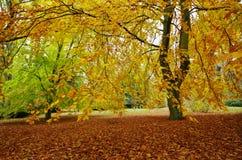 Buk w parku zdjęcie royalty free