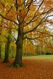 Buk w parku obrazy royalty free