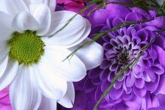bukett Royaltyfria Bilder