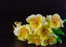 Bukett av Alstroemeria Royaltyfria Foton
