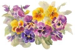 Bukett av altfiolvattenfärgen Royaltyfri Fotografi