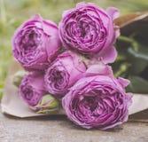 Bukett av bleka purpurfärgade rosor Royaltyfri Bild