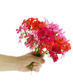 Bukett av blommapelargon royaltyfria foton