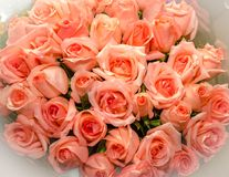 Bukett av blommarosor övre sikt royaltyfri bild
